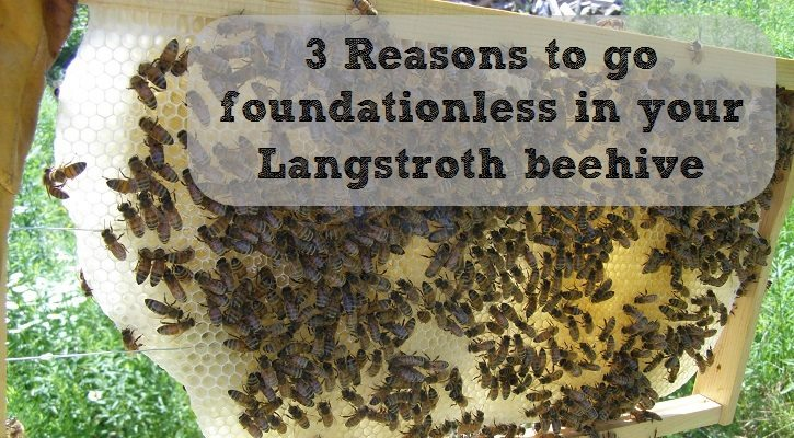 3 reasons to go foundationless in your langstroth beehive