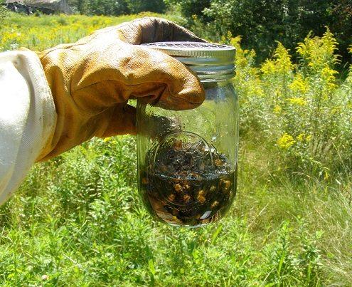 varroa sampling via alcohol wash