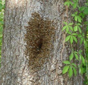 tree nesting bees
