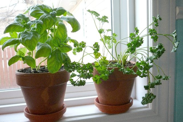 kitchen windowsill herb garden