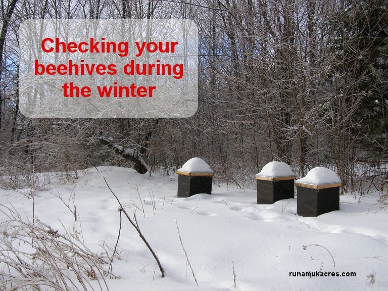 Checking hives in winter