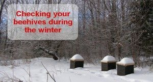 Winter beekeeping: Checking your hives