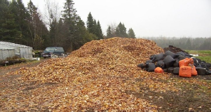 Mulch at Snakeroot_FI