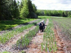 new farmers face challenges