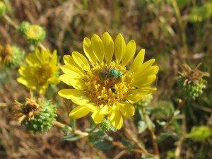 who are the pollinators