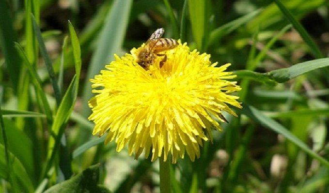 Spring Beekeeping