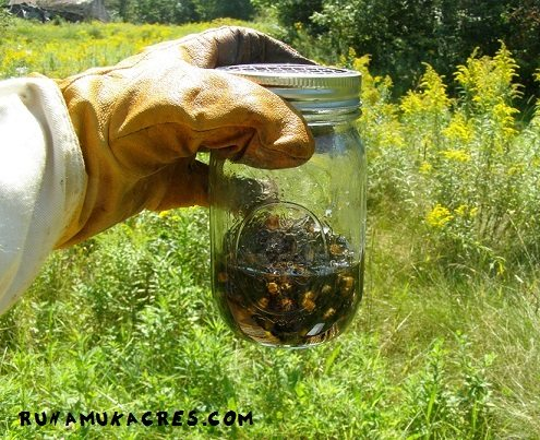 medications & mite-treatments in preparation for winter