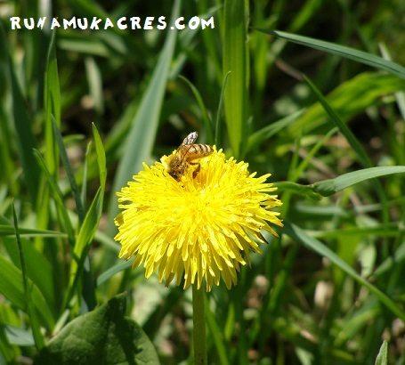habitat fragmentation of maine bees