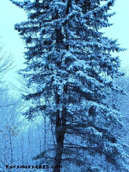 snowy tree on the farm