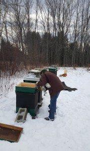 january hive check