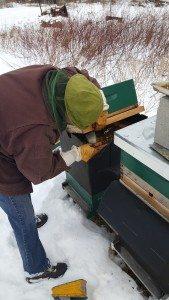 winter hive check