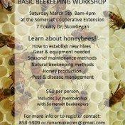basic beekeeping crash course