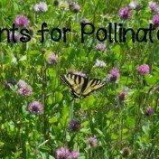 Plants for Pollinators_FIsm