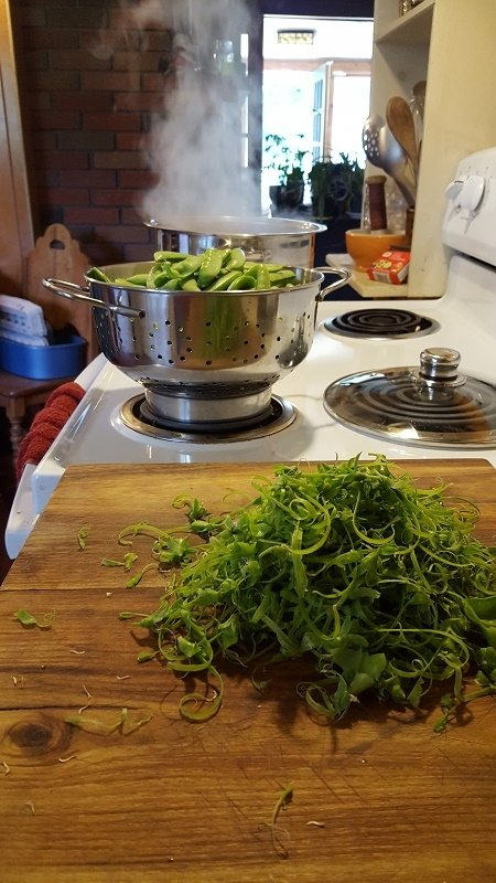 Processing snap-peas for freezing.