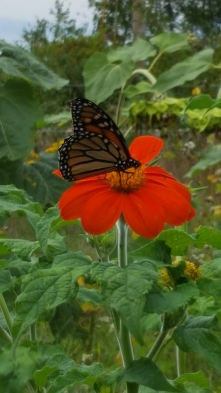 pollinator conservation through agriculture