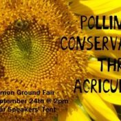 pollinator-conservation-in-agriculturefi