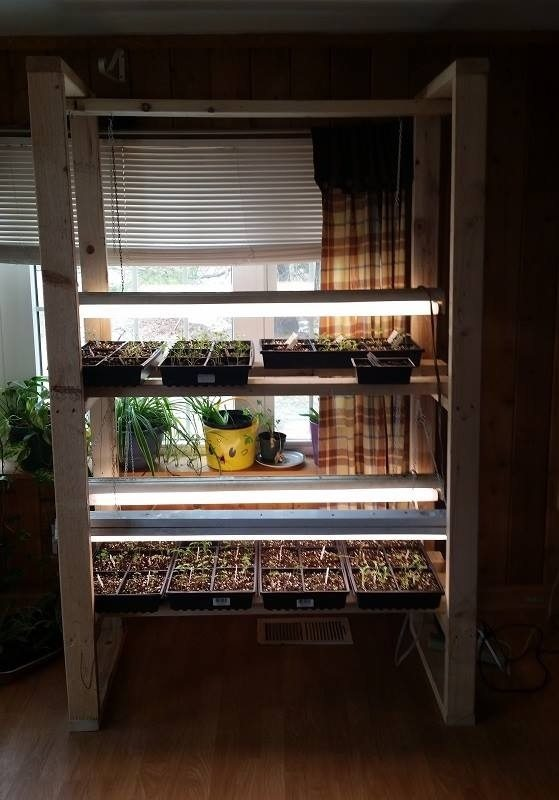 starting-your-own-seeds