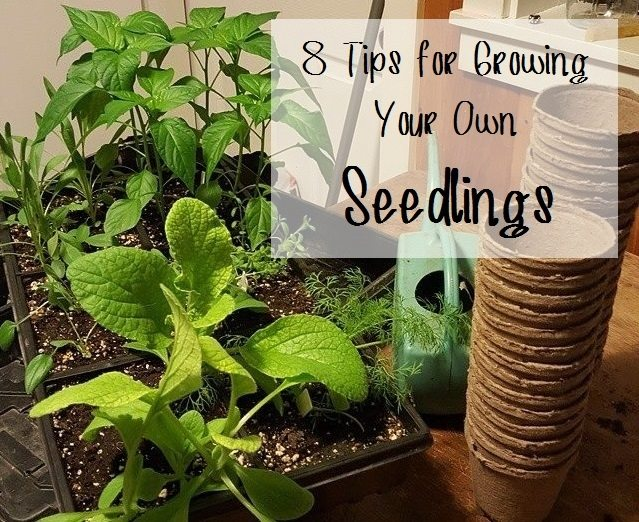 tips-for-growing-your-own-seedlings