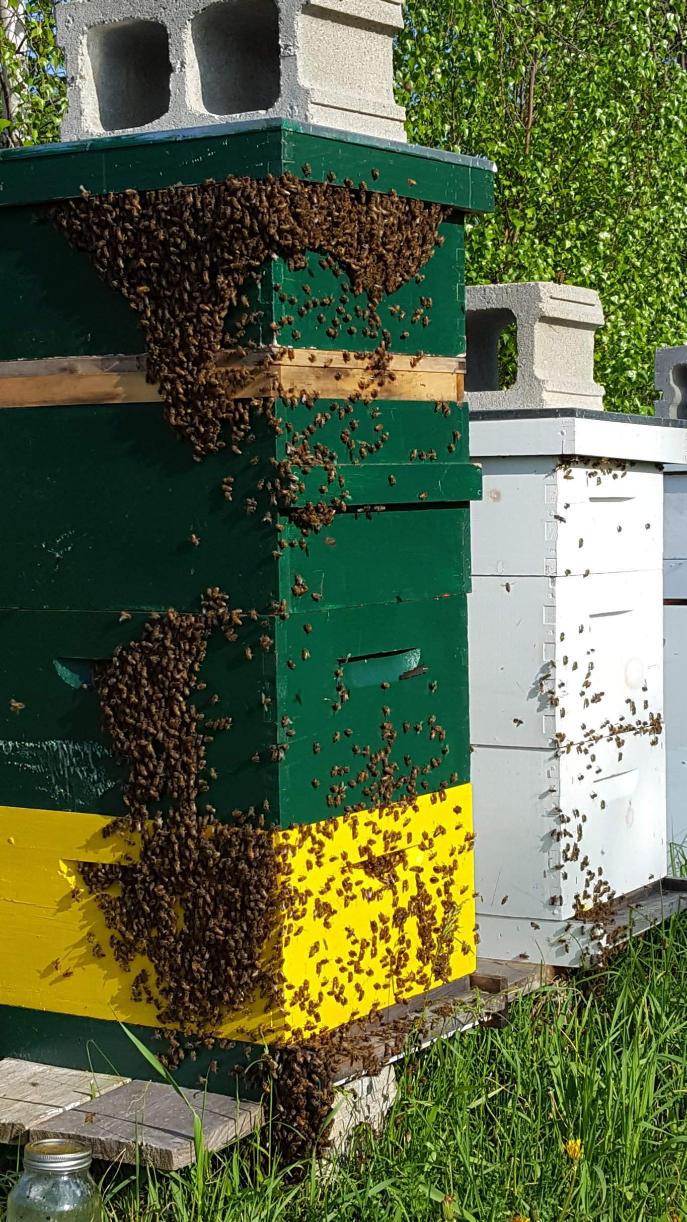 how to set up your first beehive runamuk acres farm u0026 apiary